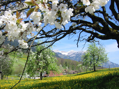 Frühlung